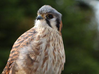 Biologie des oiseaux